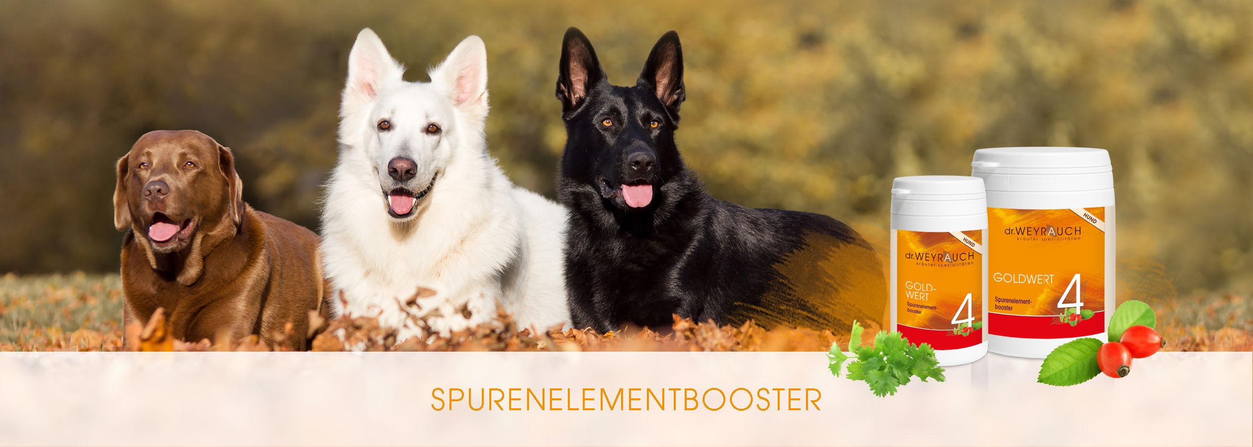 HEADER-2017-Goldwert-Hund