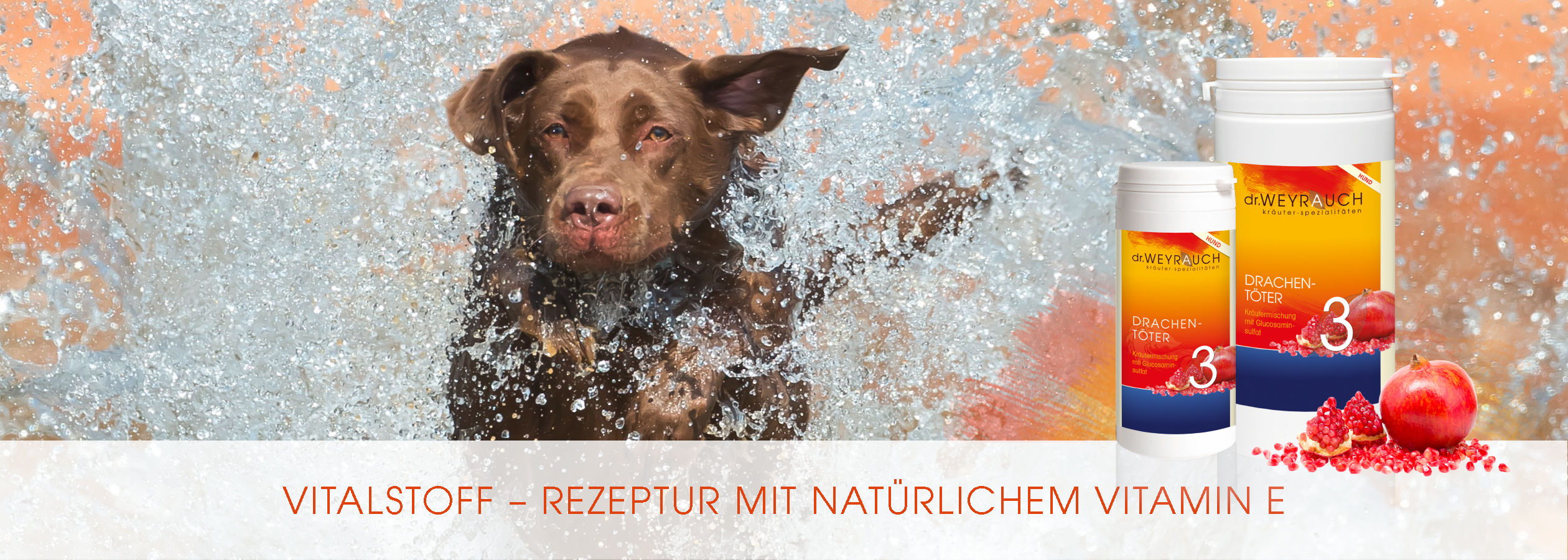 HEADER-2017-Drachent-ter-Hund