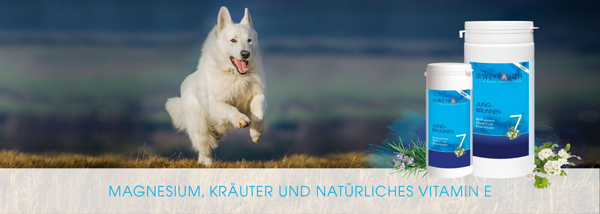 HEADER-2017-Jungbrunnen-Hund