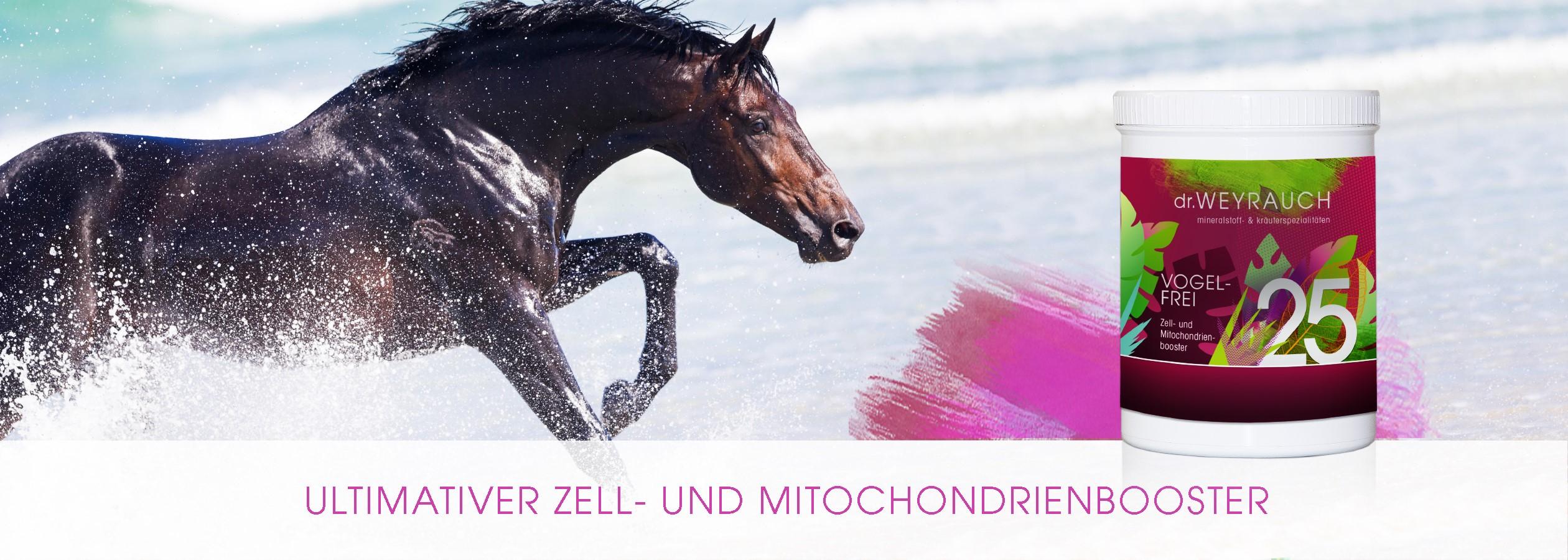 HEADER-2020-Vogelfrei-Pulver-Pferd-V2