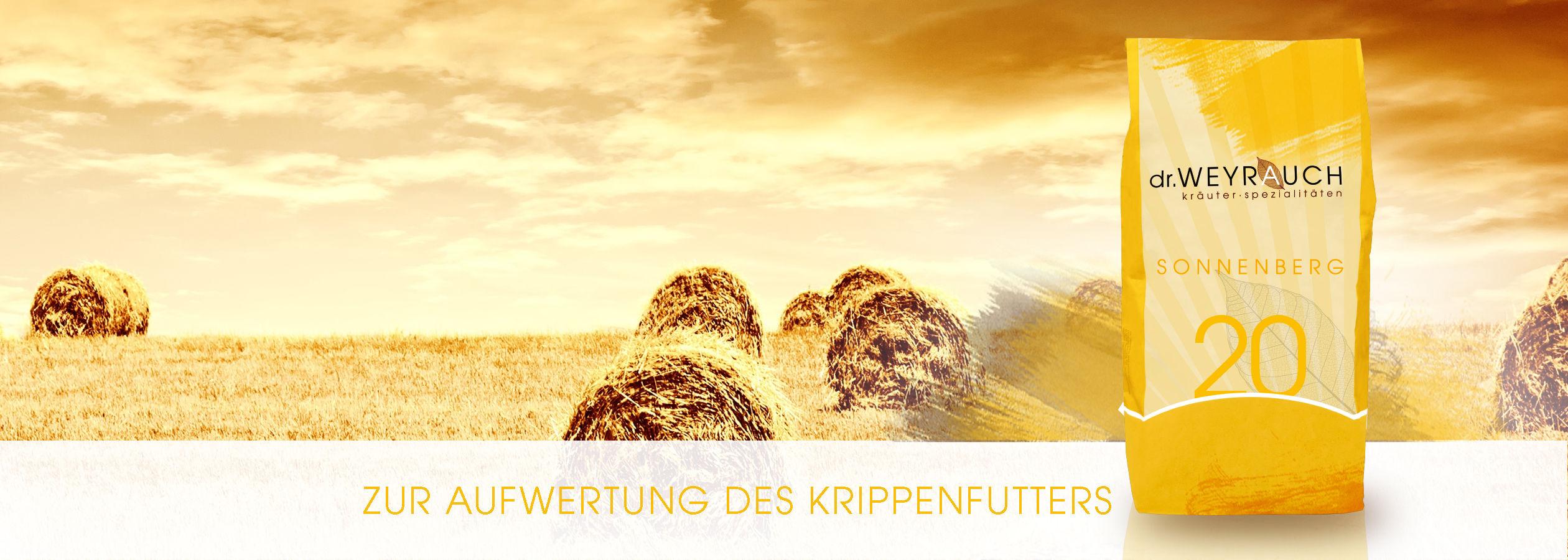 HEADER-2017-Sonnenberg-Pferd
