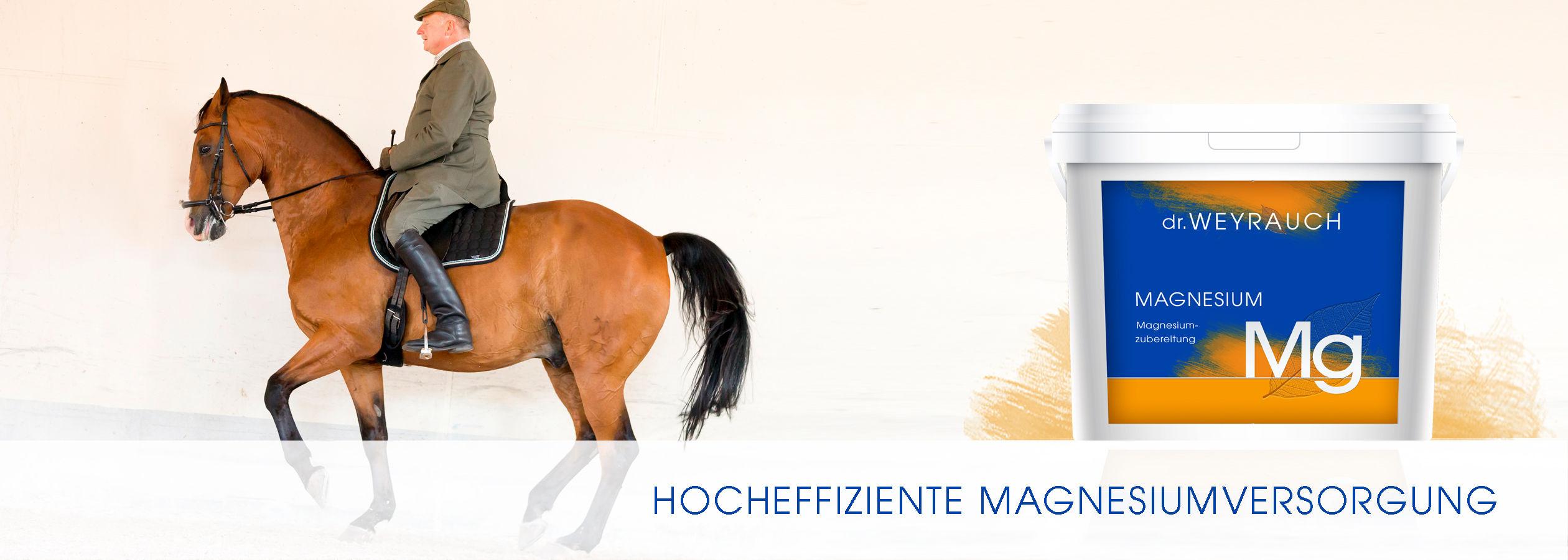 HEADER-2017-Magnesium-Pferd