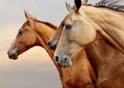 Seichte Farbtöne beim Pferd können auf Manganmängel hinweisen