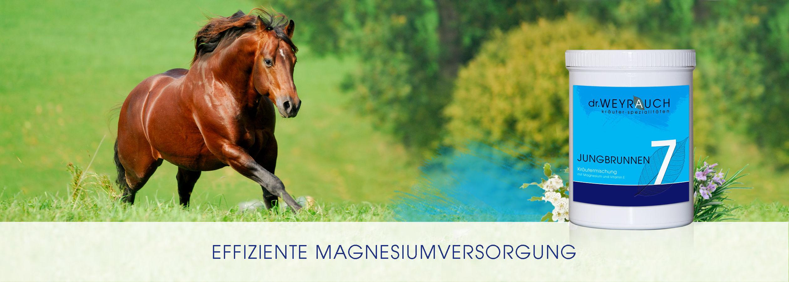 Header-2017-7-Jungbrunnen-Pferd