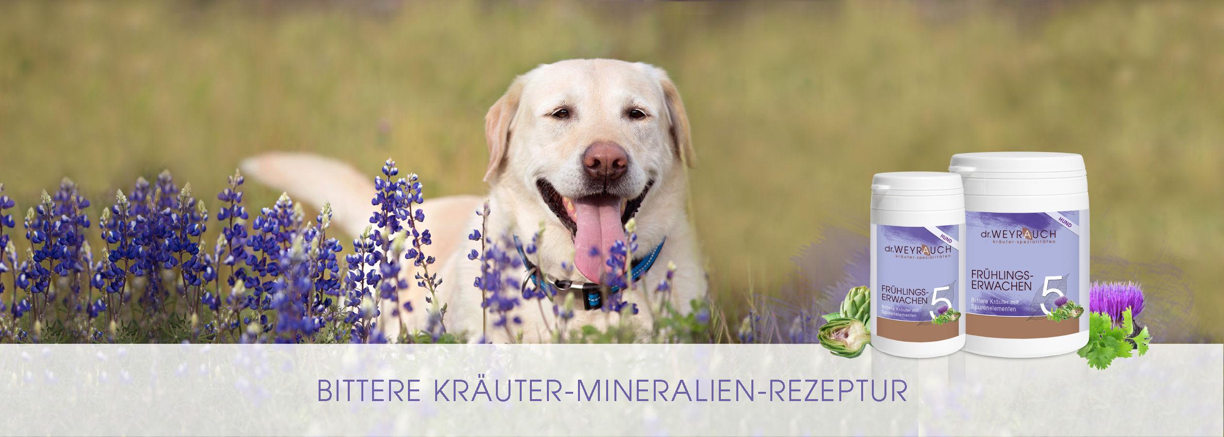 HEADER-2017-Fr-hlingserwachen-s-Hund