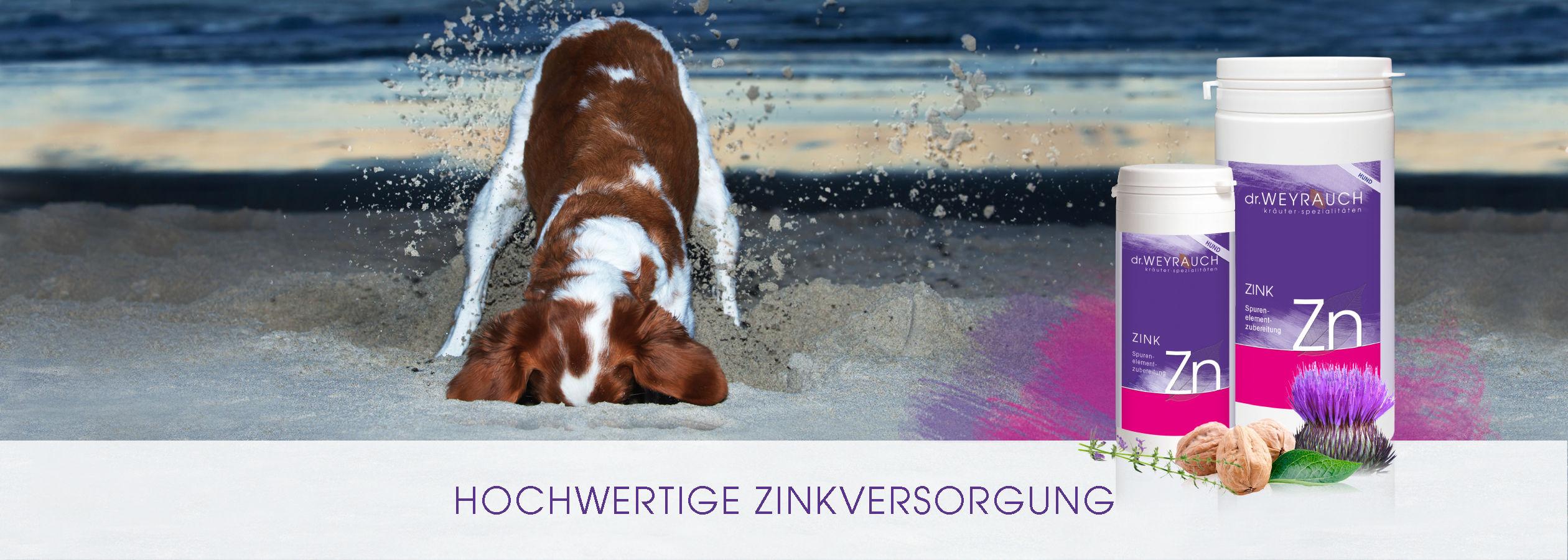 HEADER-2017-Zink-Hund