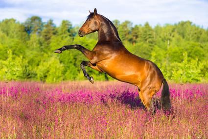 Stoffwechsel des Pferdes