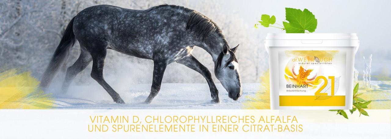 Header-Beinhart-mit-Pferd-neu