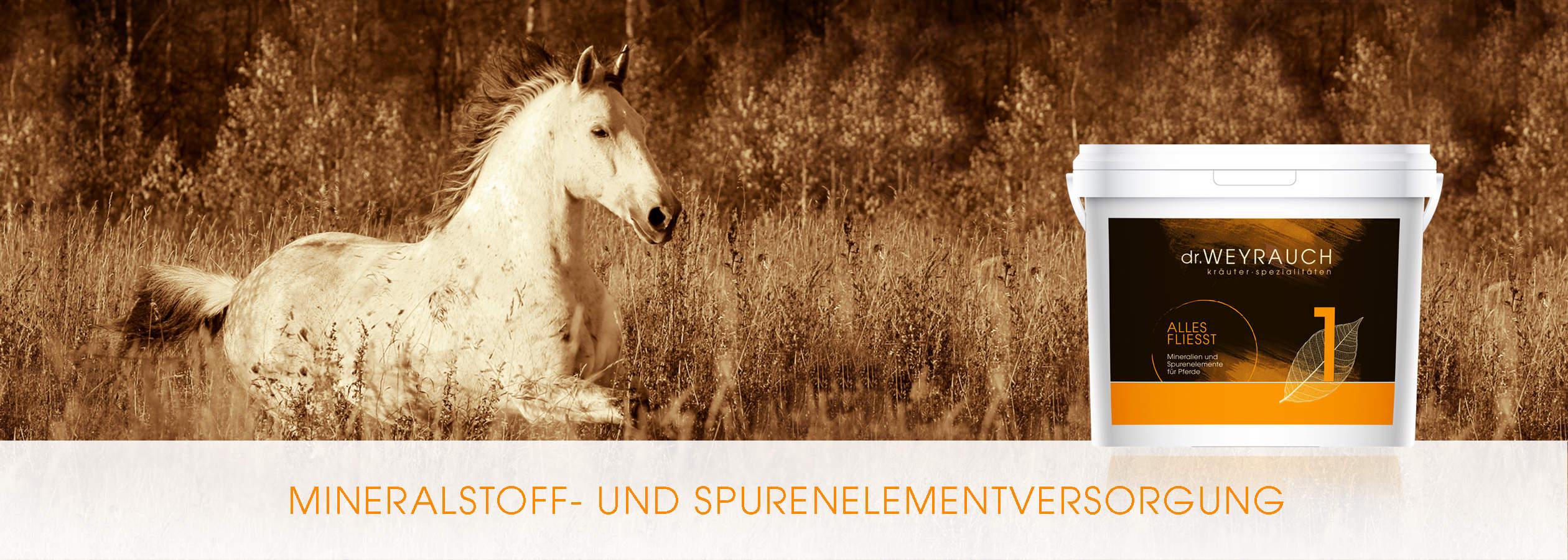 HEADER-2017-Alles-Fliesst-Pferd