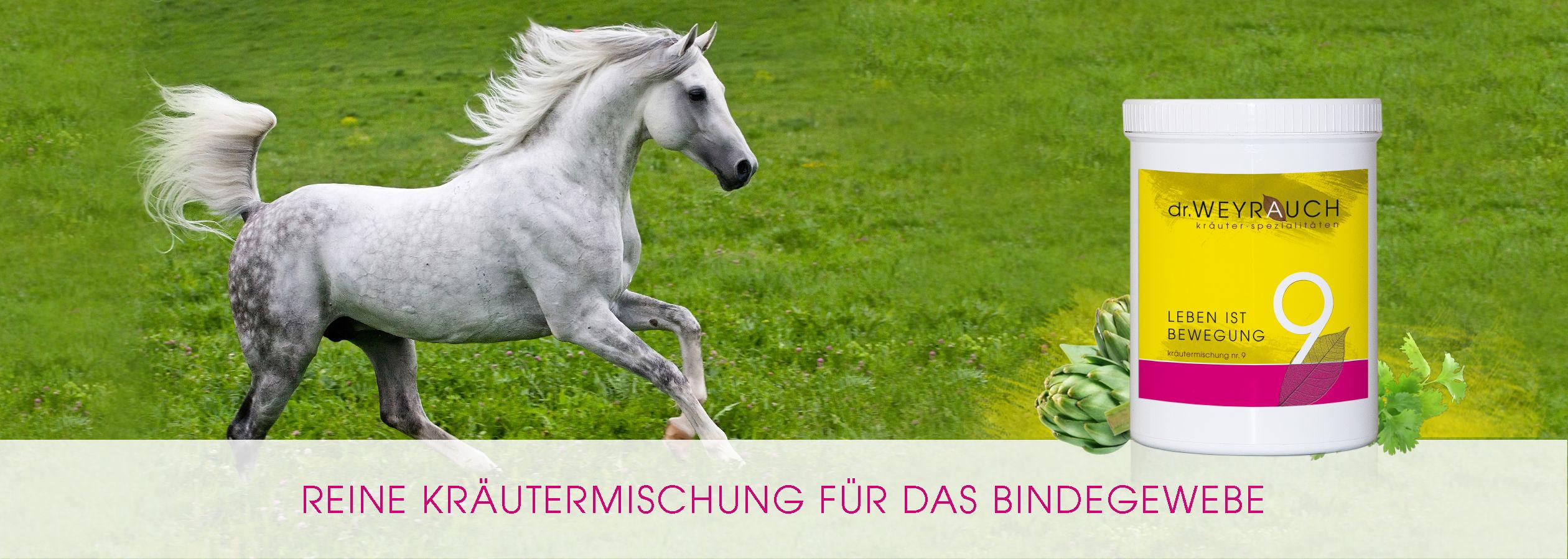 HEADER-2017-Leben-ist-Bewegung-Pferd