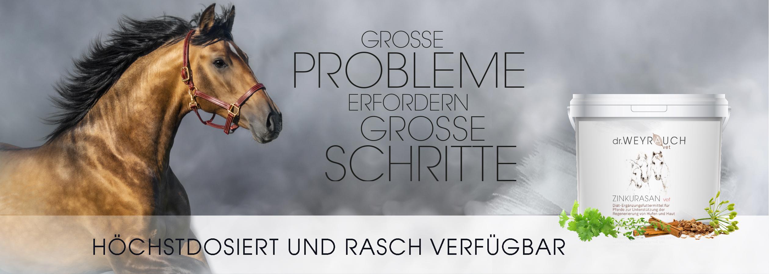 HEADER-2021-Zinkurasan-Pferd
