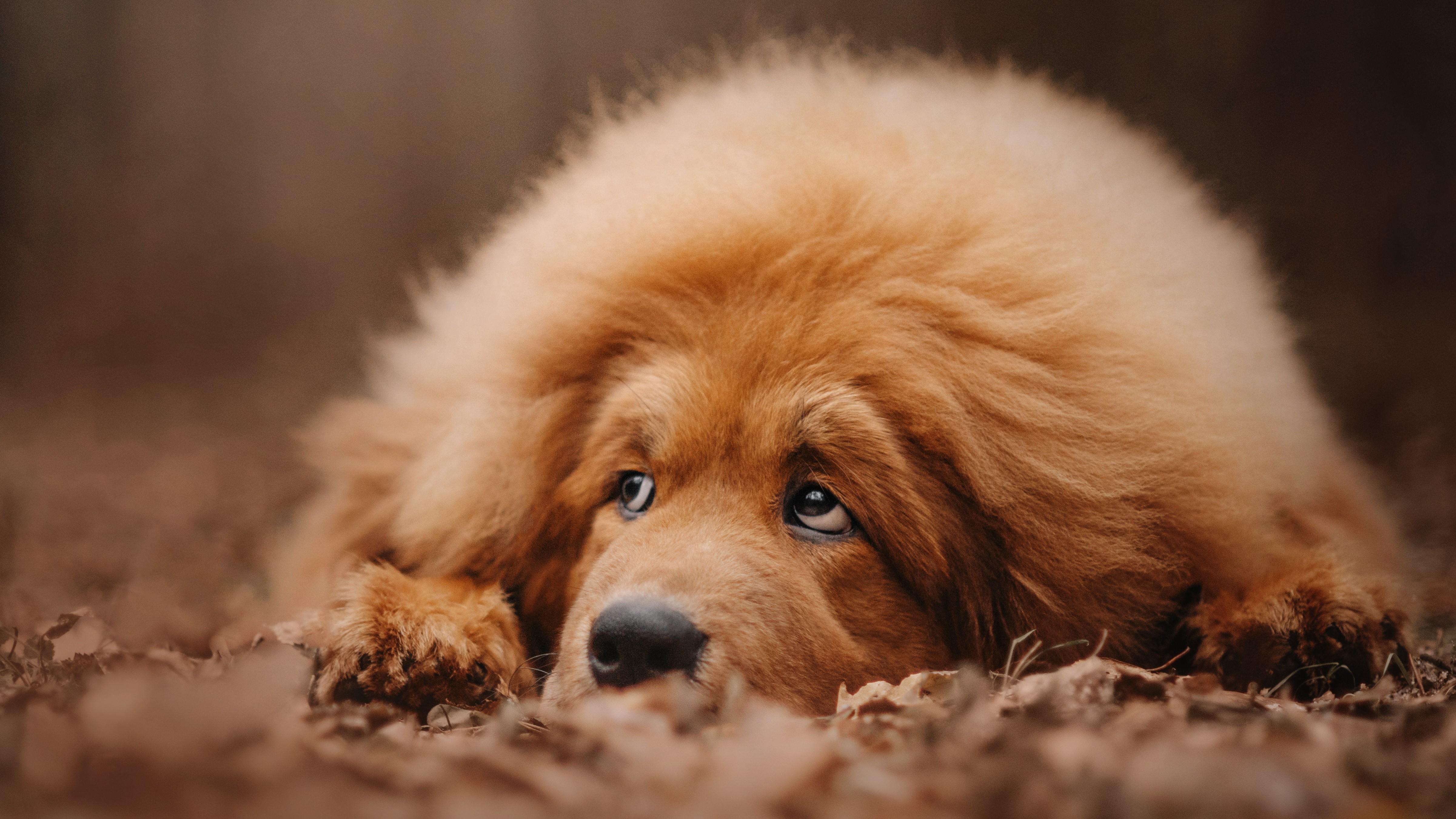 Hund-mit-Haaren