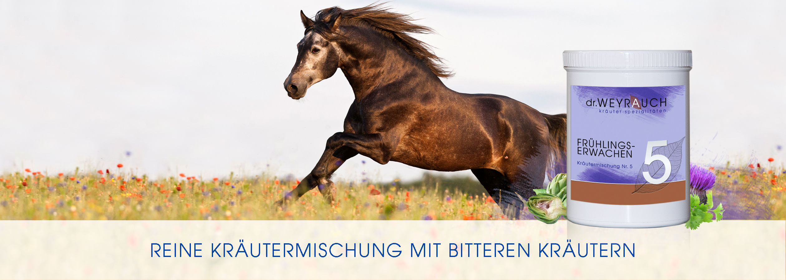 HEADER-2017-Fru-hlingserwachen-Pferd