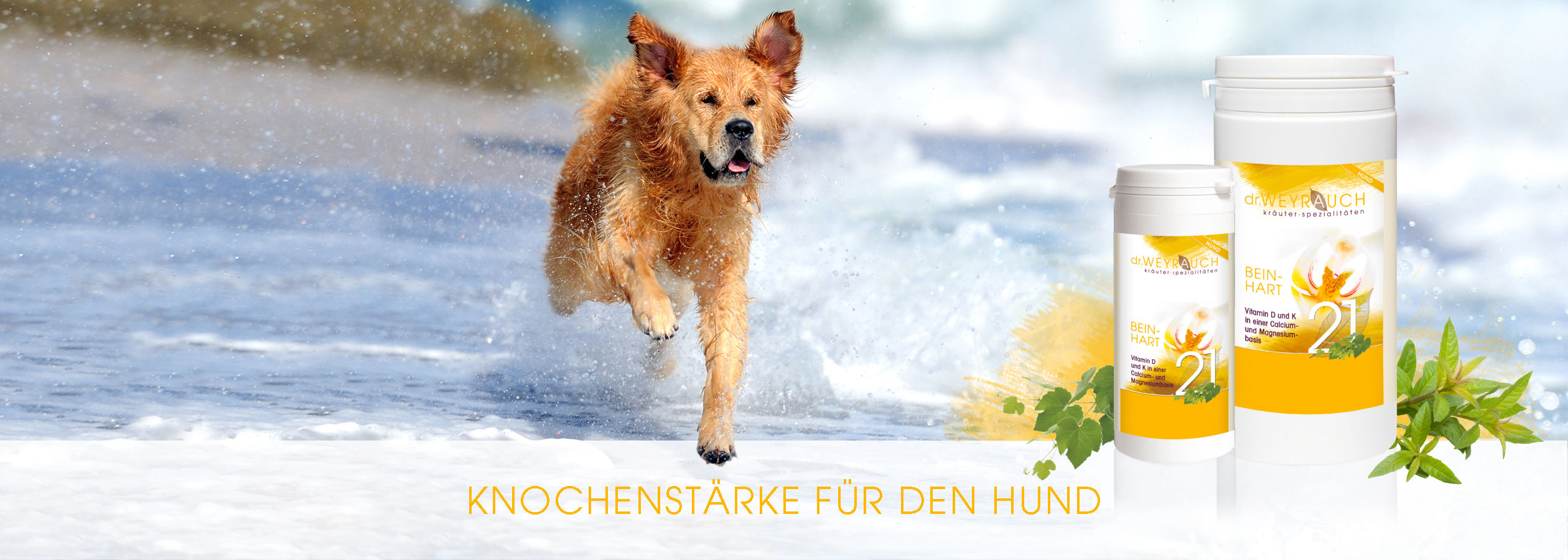 HEADER-2017-Beinhart-Hund