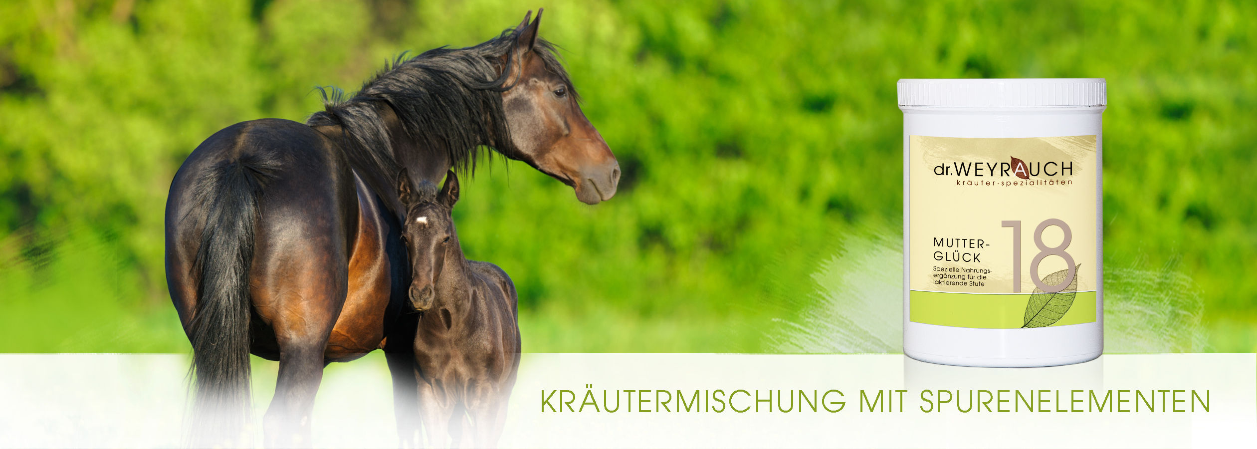HEADER-2017-Muttergl-ck-Pferd