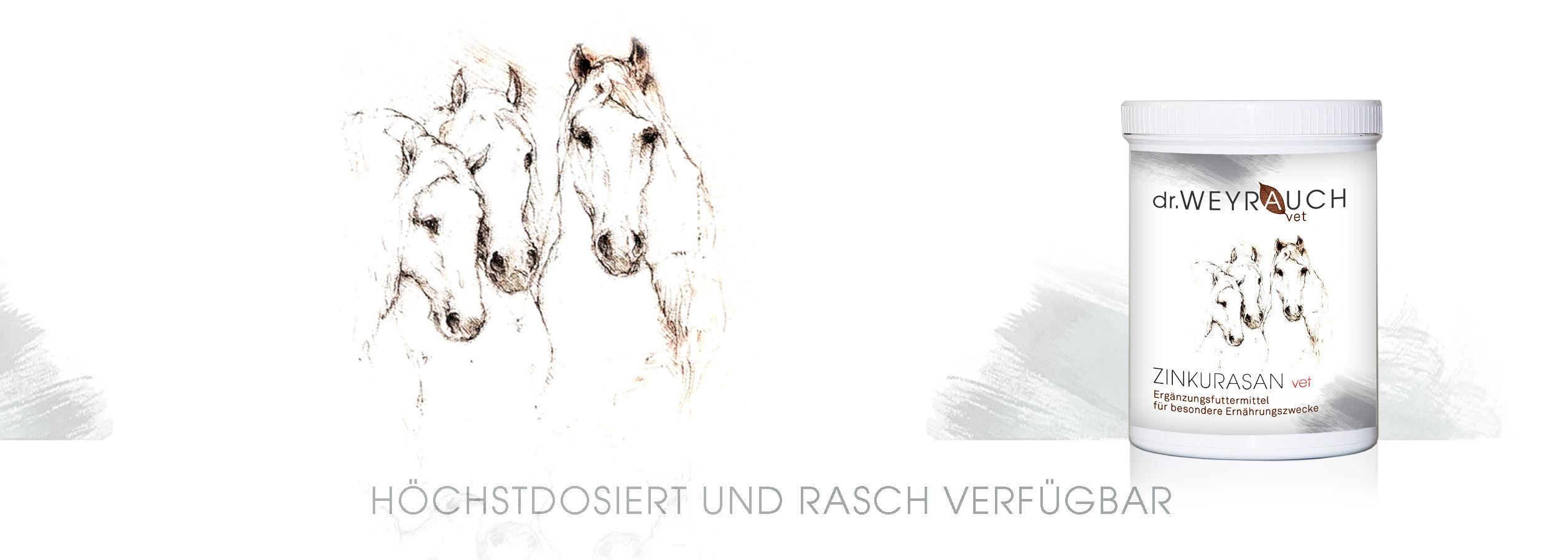 HEADER-2017-Zinkurasan-Pferd