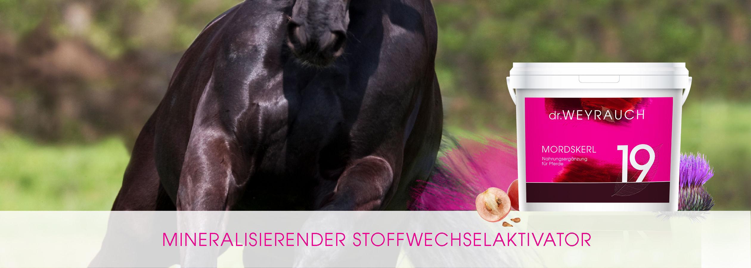 HEADER-2017-Mordskerl-Pferd