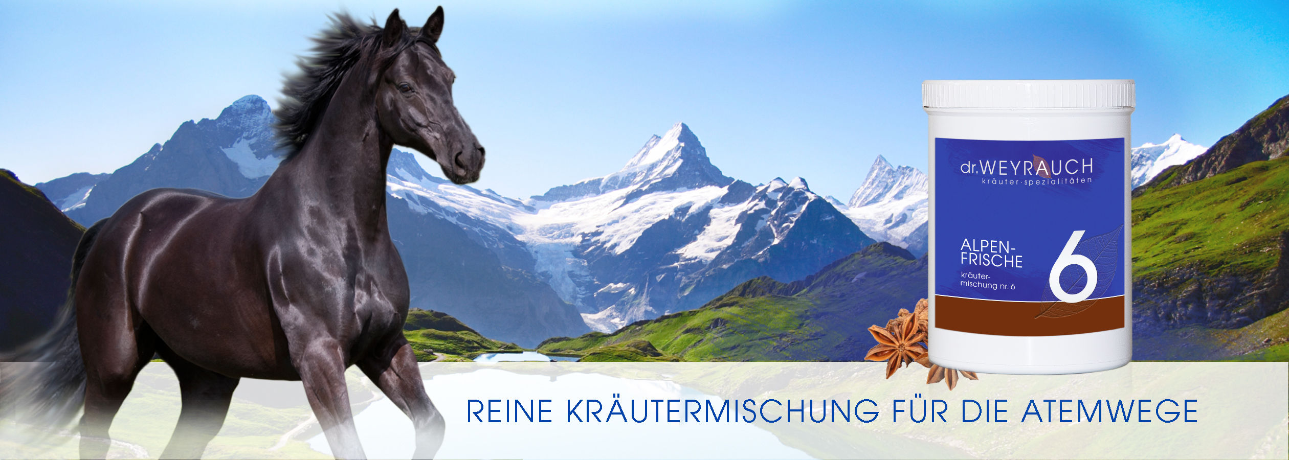 HEADER-2017-Alpenfrische-Pferd