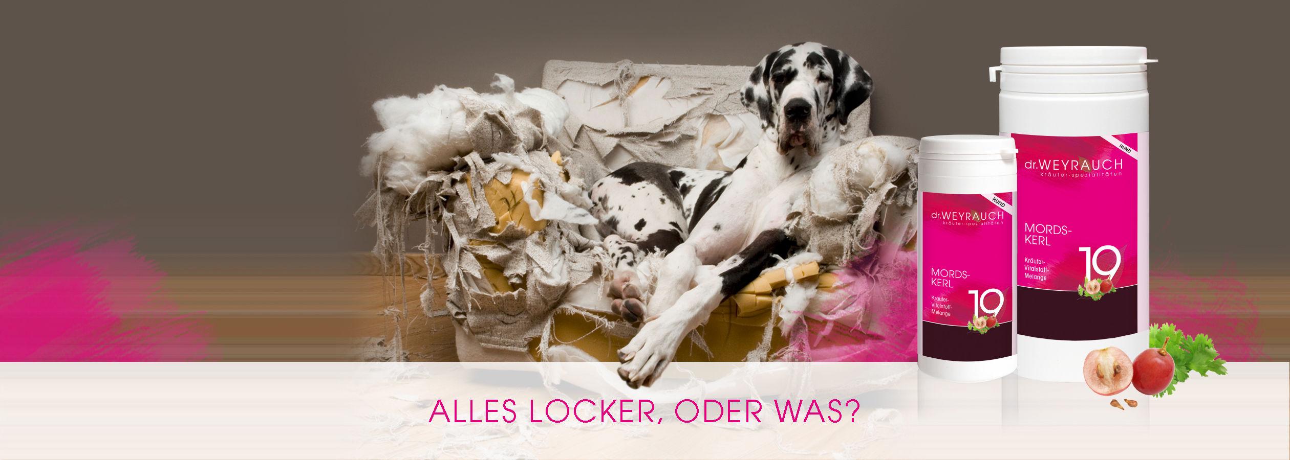 HEADER-2017-Mordskerl-Hund