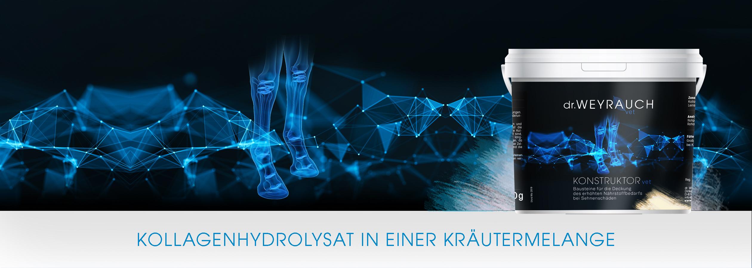 HEADER-2019-Konstruktor-Pferd_KA2_dunkel