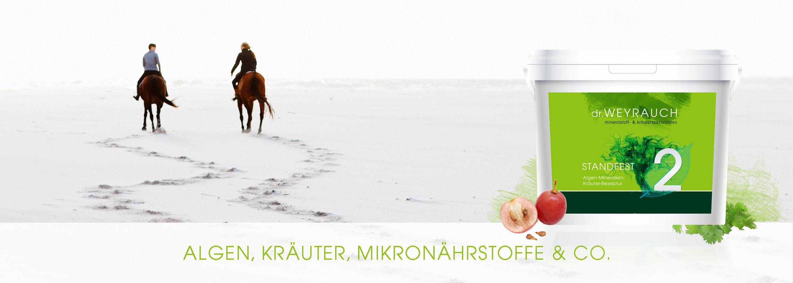 HEADER-2017-Standfest-Pferd