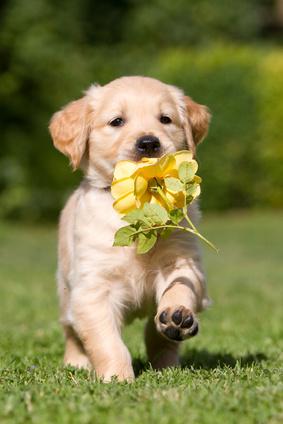 kleiner-hund